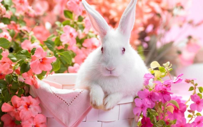 Bon Samedi Bunny_11