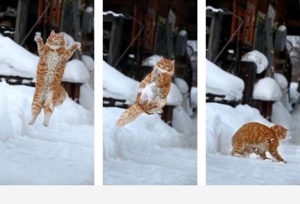 Bonne Jeudi Cat-in10