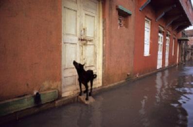Bon Jeudi Dog-in10
