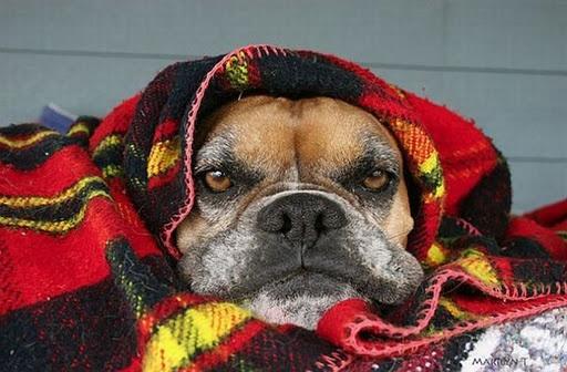 Bon Mercredi Dog_bm10