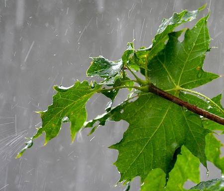 Bon Mercredi Rain-c10