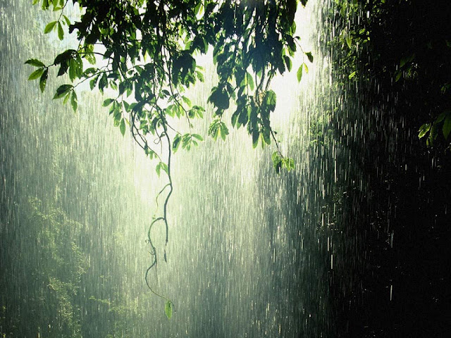 Bon Mercredi Rain_p10