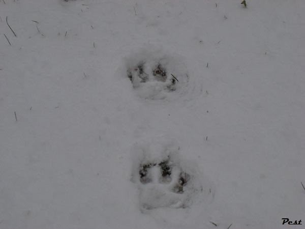 Bon Dimanche Snow_h11