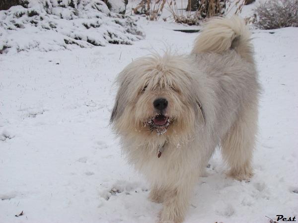 Bon Dimanche Snow_h12