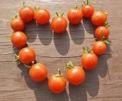 Bon Mardi Tomato10