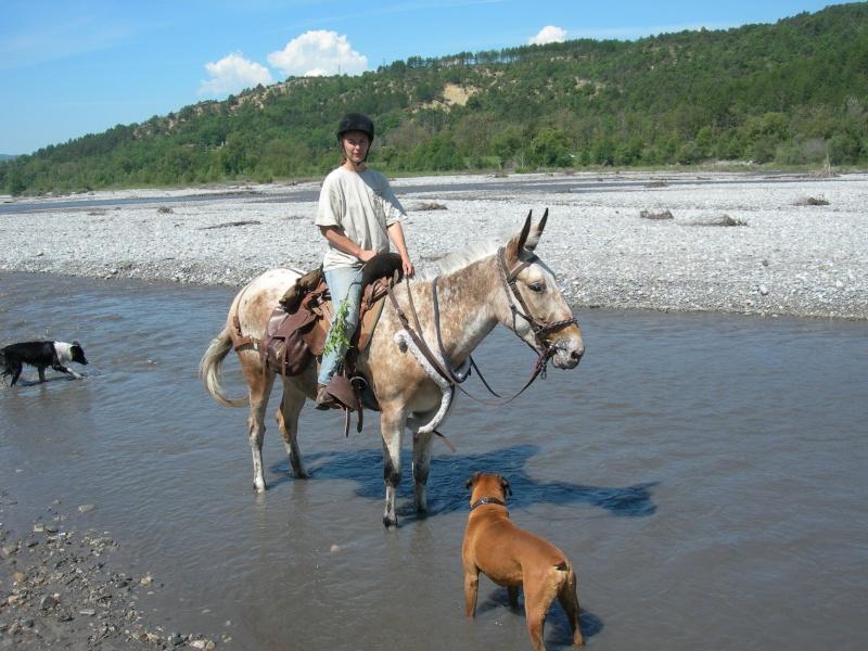 Photos de ma mule pour rêver suite Dscn3911
