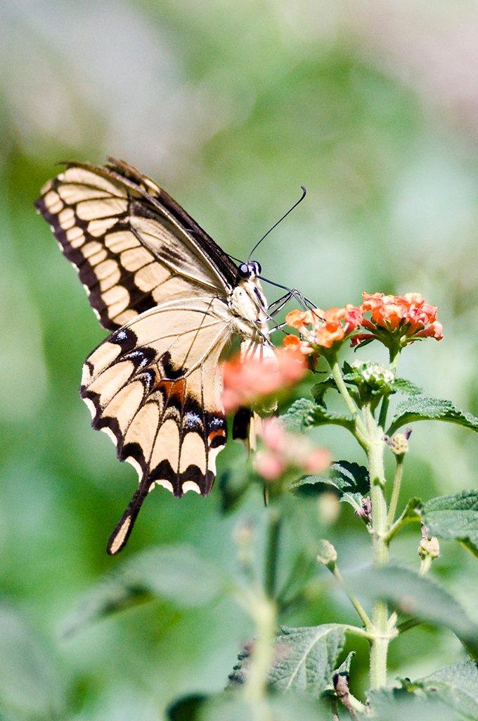 insetti e rettili  28043710