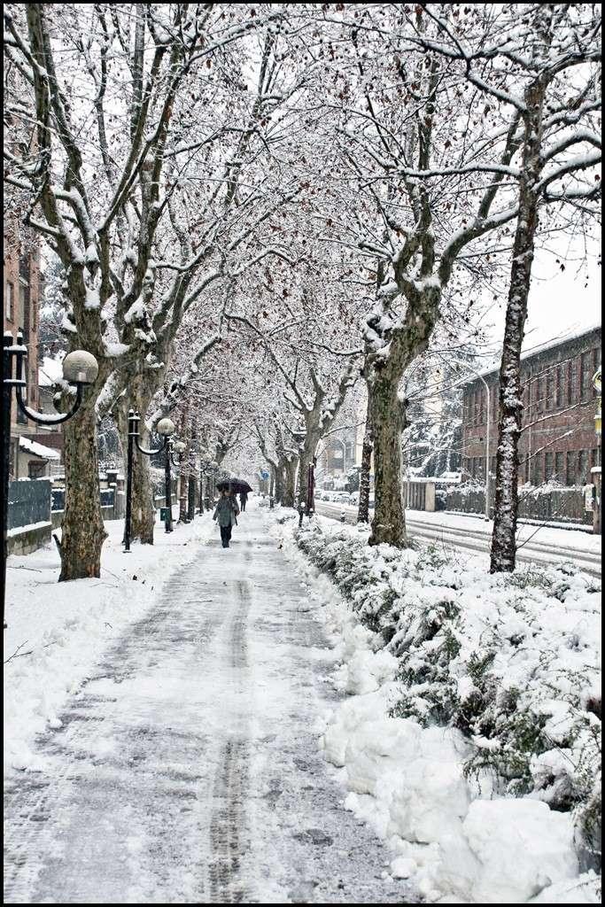 La neve sta attaccando Dsc_3511
