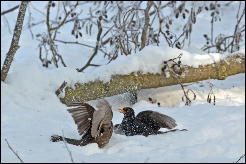 Le mattinate d'inverno a Racconigi   Dsc_3911