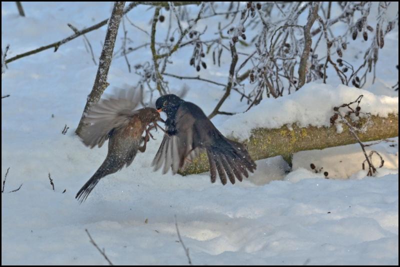 Le mattinate d'inverno a Racconigi   Dsc_3912