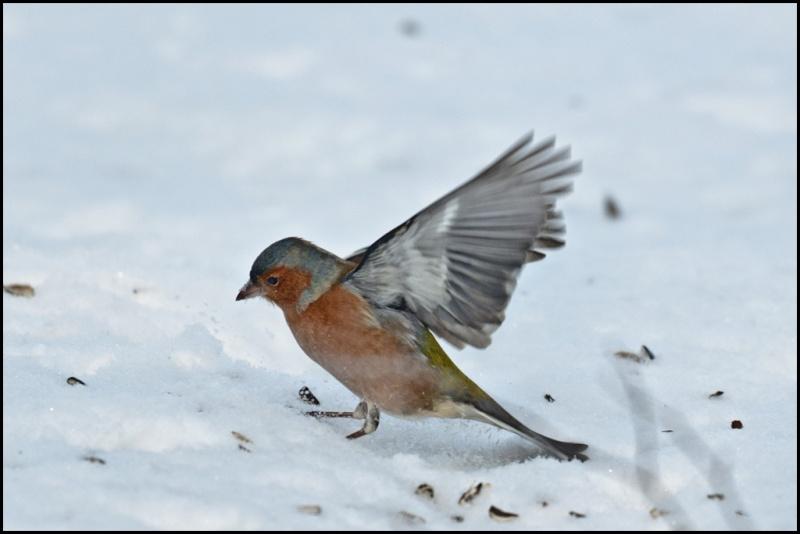 Le mattinate d'inverno a Racconigi   Dsc_4010