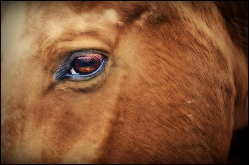 cavalli un po elaborati e non.... Dsc_6410