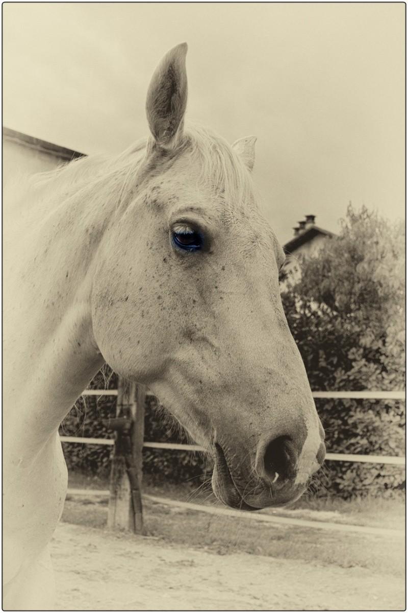 cavalli un po elaborati e non.... Dsc_6411