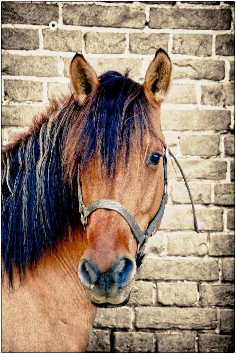 cavalli un po elaborati e non.... Dsc_6912