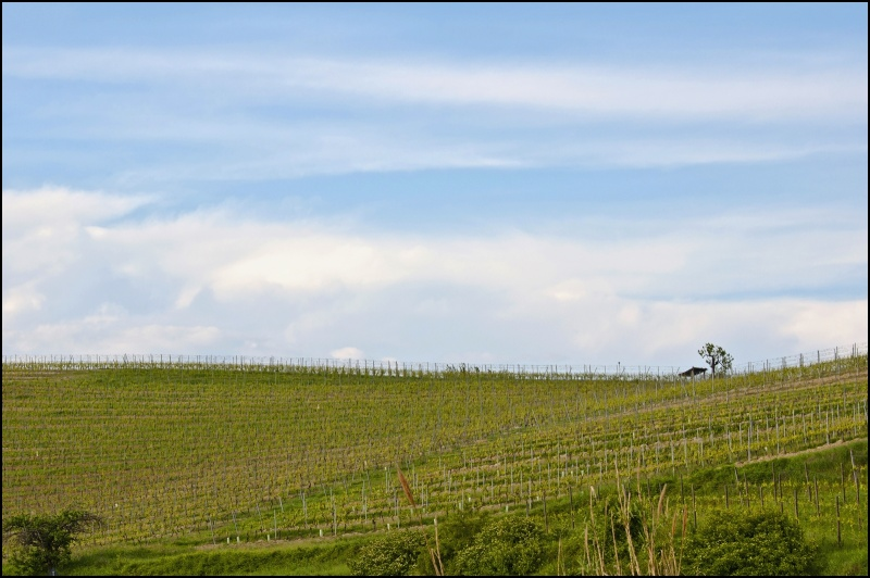 colline monferrato Dsc_9113