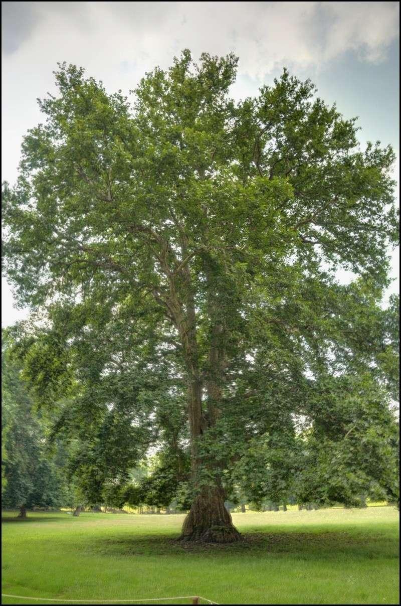 questioni di alberi secolari Hdr210