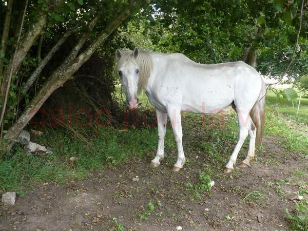 DONA - PRE née en 1987 - accueillie en septembre 2012 chez Pech-Petit Dona_a10