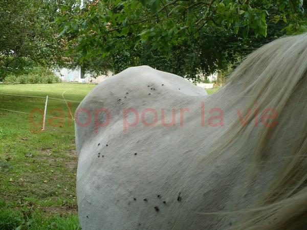DONA - PRE née en 1987 - accueillie en septembre 2012 chez Pech-Petit Dona_a12