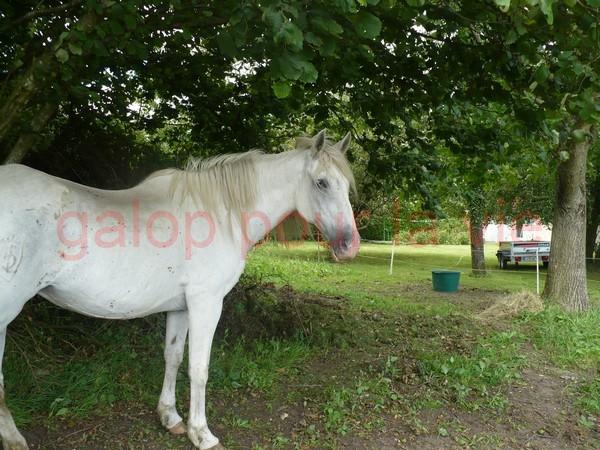 DONA - PRE née en 1987 - accueillie en septembre 2012 chez Pech-Petit Dona_a14