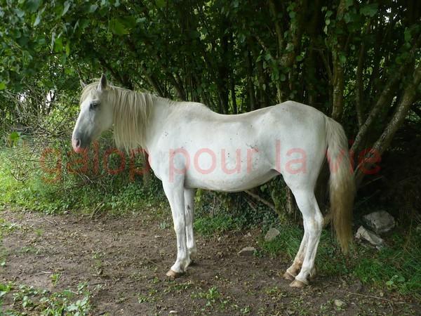 DONA - PRE née en 1987 - accueillie en septembre 2012 chez Pech-Petit Dona_a15