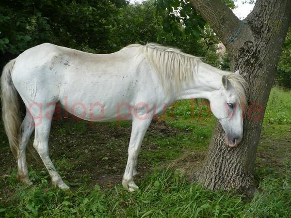 DONA - PRE née en 1987 - accueillie en septembre 2012 chez Pech-Petit Dona_a16
