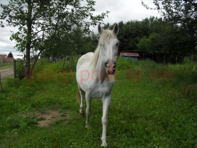 DONA - PRE née en 1987 - accueillie en septembre 2012 chez Pech-Petit Sam_3211