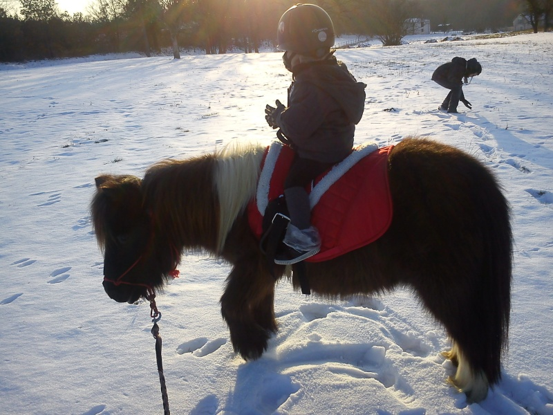 Nouveau concours photos ! La neige, vous, vos chevaux ! - Page 3 Dsc00811