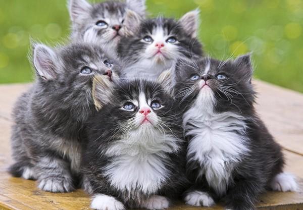 Les chats - Page 3 5797b510
