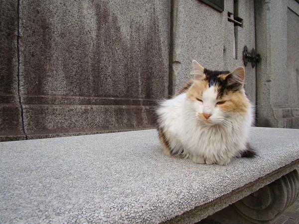 Les chats 68fdf510