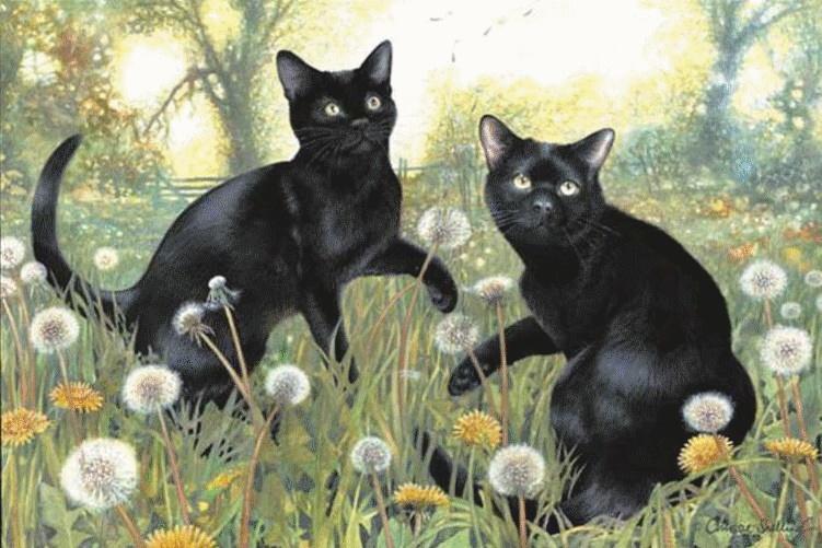 Les chats - Page 5 C_snel10