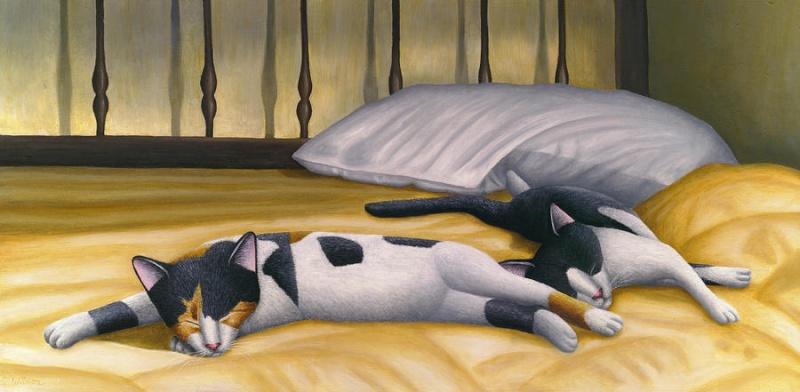 Bonne mardi Cats-s10