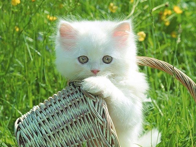 Les chats Ch_2_b10