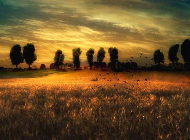 Bonne Vendredi - Journée de Souvenir Sunset12