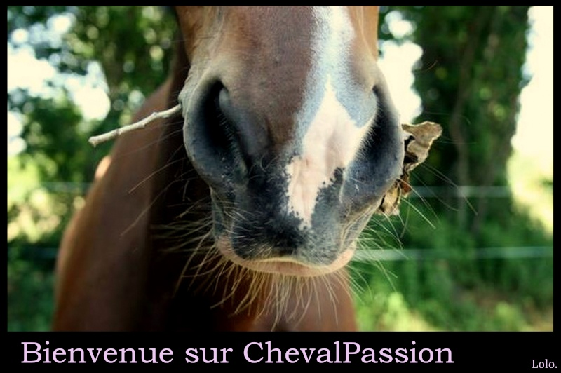 RENDRE SON CHEVAL PLUS CONFIANT EN L'HOMME Captur11