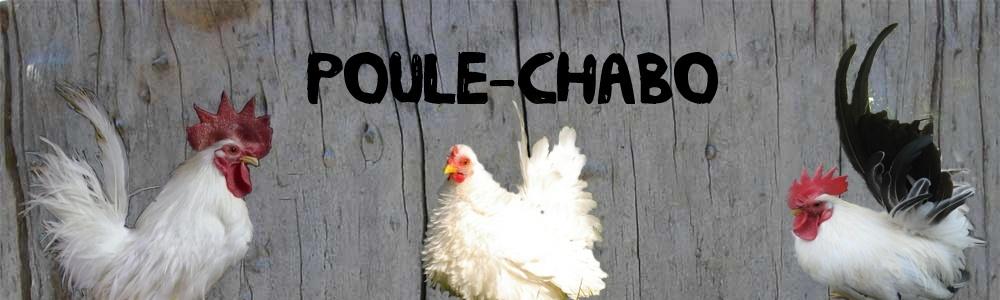 la poule Chabo