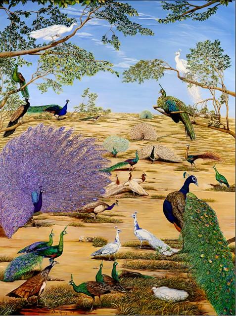 LE PAON: l'oiseau aux cent yeux  - Page 6 Peafow11