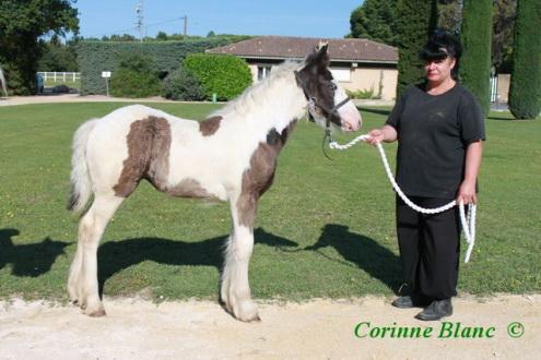 12 - 22 IC... Caraibe de la chize née le 12 04 2012 Caraib12
