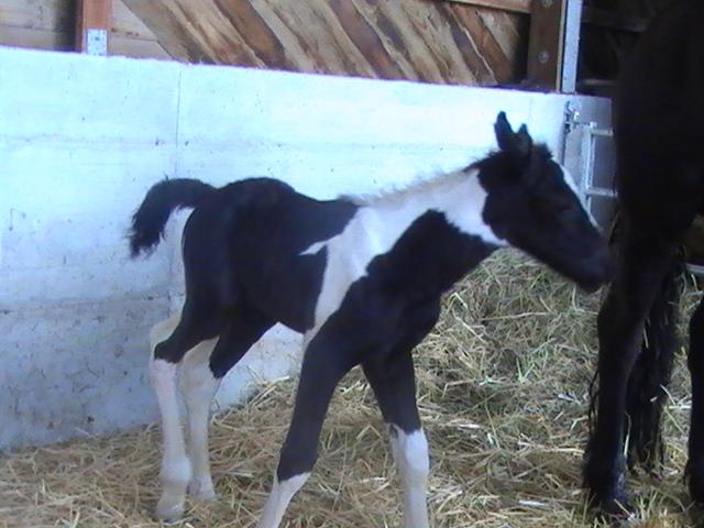 12 - 05 CB... miss-mark de la chize est née ce 29 avril 2012 Pic_3813