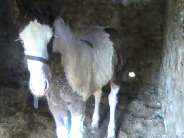 12 - 22 IC... Caraibe de la chize née le 12 04 2012 Pic_3911