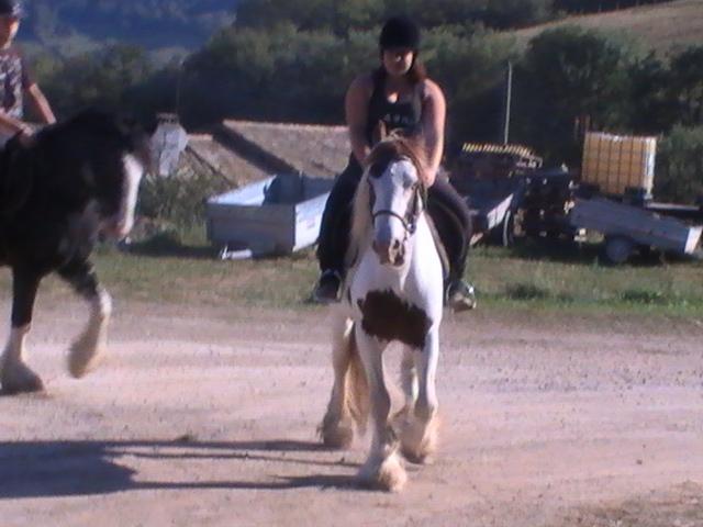 les frisons de patricia elevage de chevaux frisons et irish-cobs Pic_5014
