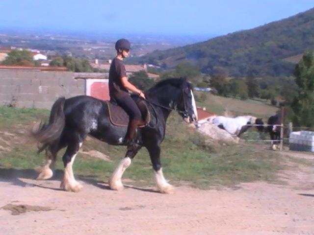 les frisons de patricia elevage de chevaux frisons et irish-cobs Pic_5015