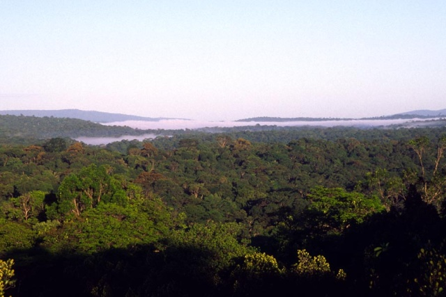 Images Grande Jungle 120for10