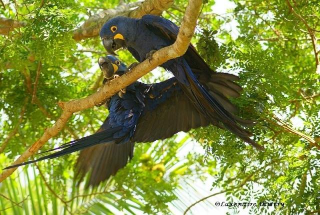 Images Grande Jungle 1725l-10