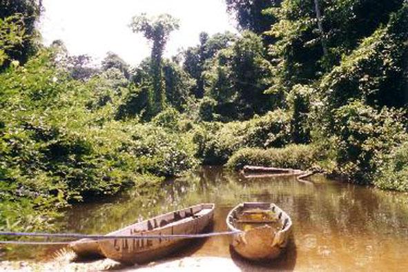 Images Grande Jungle Amaz_p11