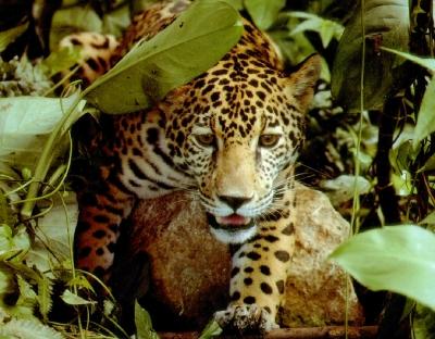 Images Grande Jungle Animam10