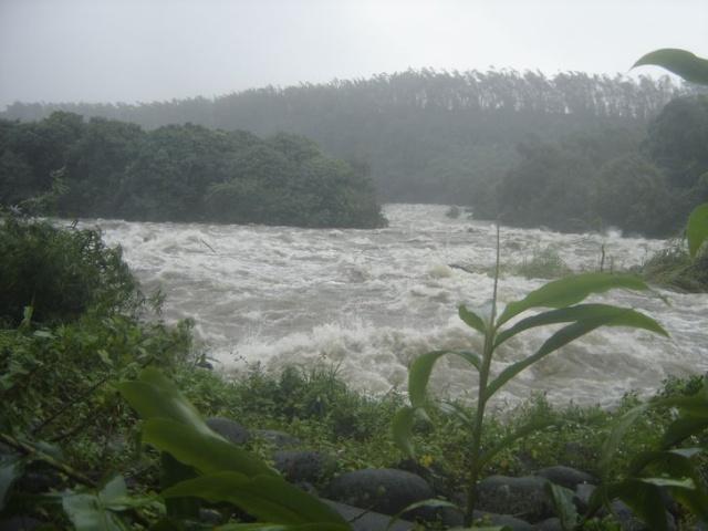 Images Grande Jungle Cyclon10