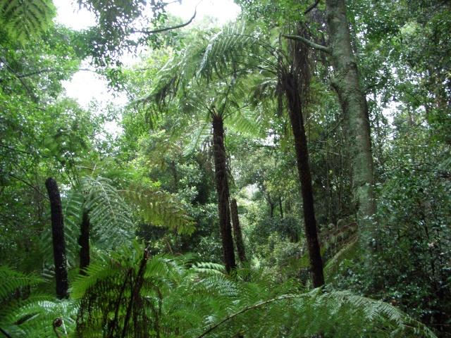 Images Grande Jungle Dinosa10