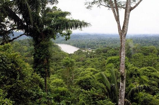 Images Grande Jungle Foret-10