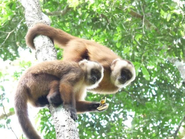 Images Grande Jungle P1440110