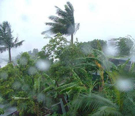 Images Grande Jungle Tempet10